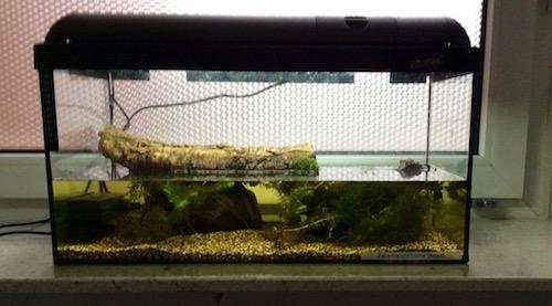 Unser Molch-Aquarium.
