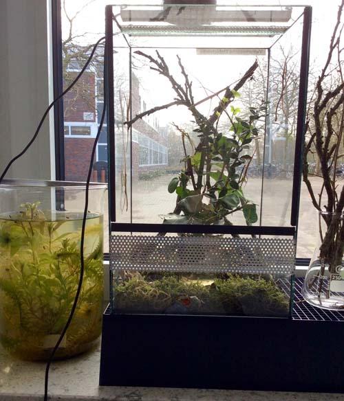 Terrarium mit Stabschrecken in der Biologischen Sammlung.